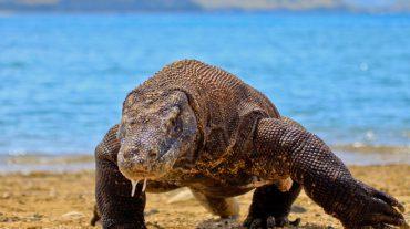 Discover Komodo
