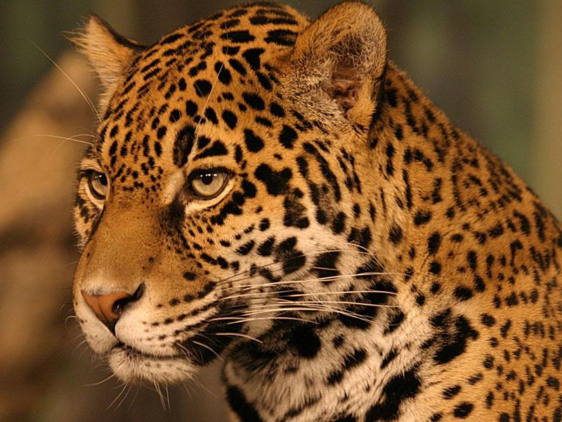 Kruger National Park <br>South Africa