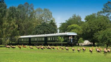 Rovos Rail Victoria Falls Journey The Most Luxurious Train in the World